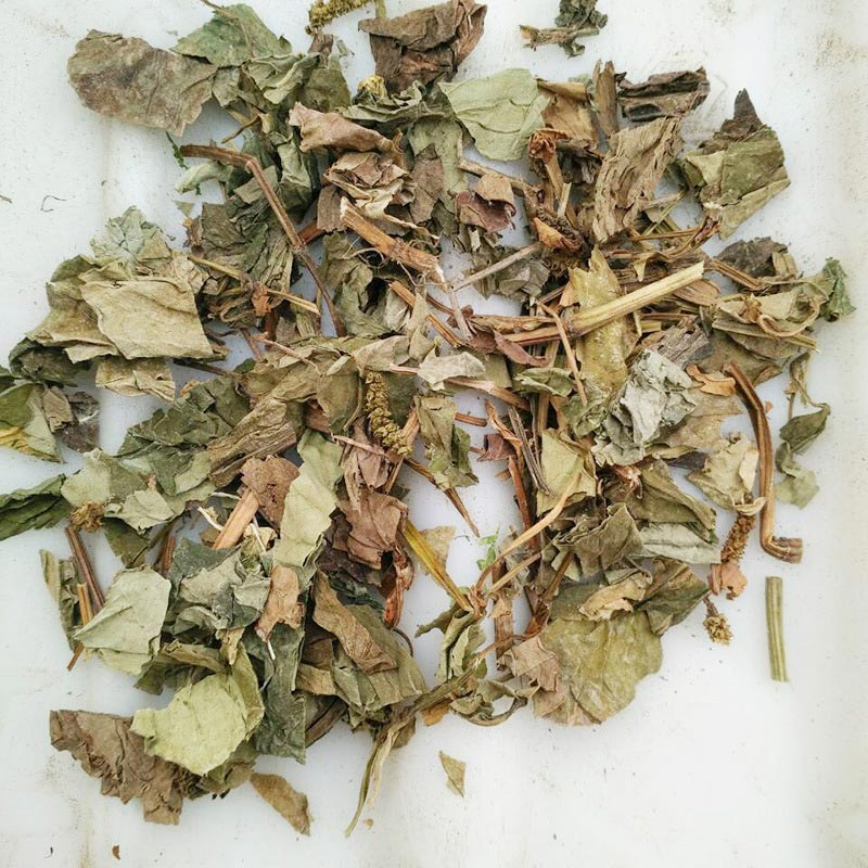 Start up to need one Chinese herbal medicine processing equipment of Houttuynia cordata -new-s-houttuynia-cordata-15