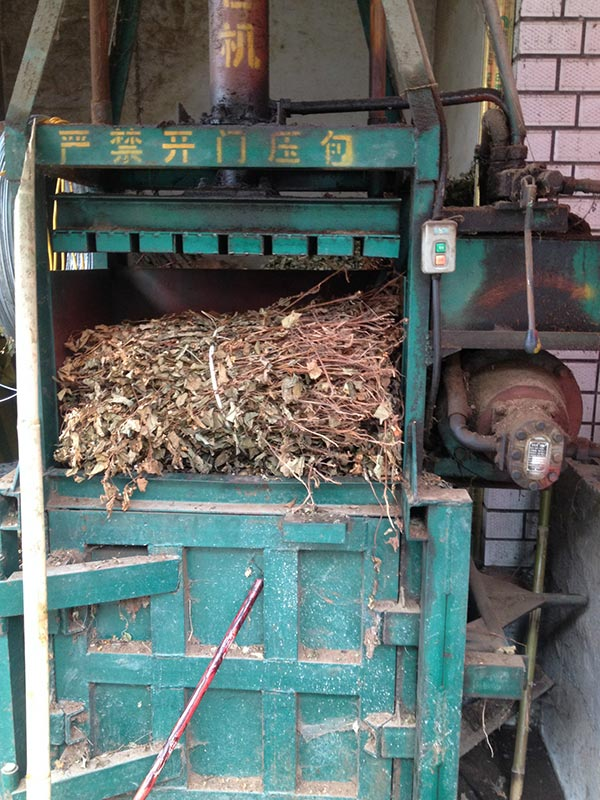 Start up to need one Chinese herbal medicine processing equipment of Houttuynia cordata -new-s-min-houttuynia-cordata-2
