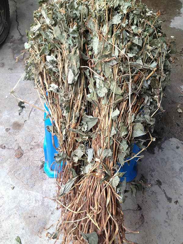 Start up to need one Chinese herbal medicine processing equipment of Houttuynia cordata -new-s-min-houttuynia-cordata-3