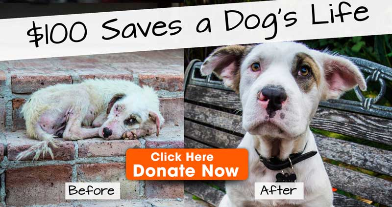 Save the dogs for the dog meat festival in Yulin, Guangxi Province -promo-donate-2
