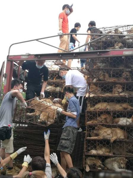 Save the dogs for the dog meat festival in Yulin, Guangxi Province -save-dogs-1
