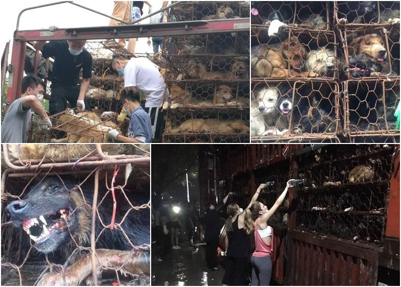 Save the dogs for the dog meat festival in Yulin, Guangxi Province -save-dogs-8-1